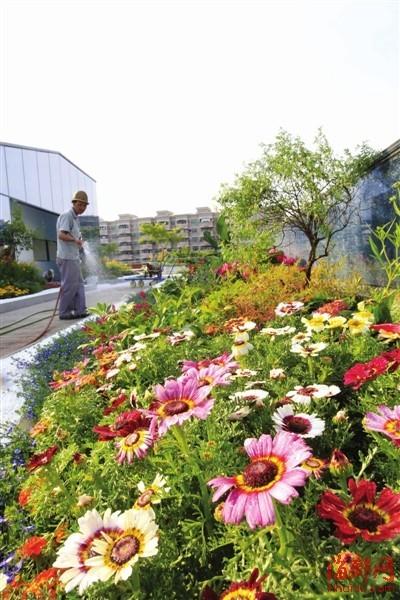 温泉博物馆顶楼天台,长达百米的花廊令人赏心悦目