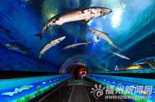 鲟鱼水族馆第四展区规划效果图