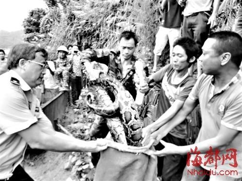 大蟒蛇出现在村中桥头,警民协力助其回归自然
