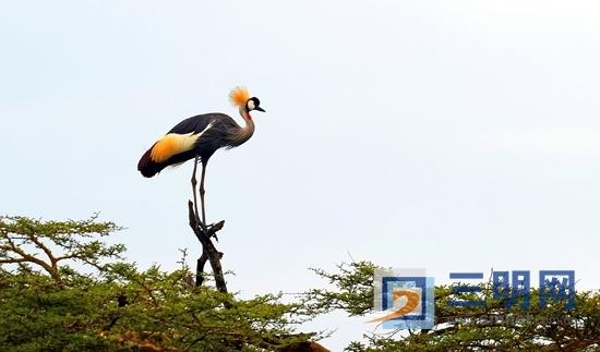 到东非看动物大迁徙