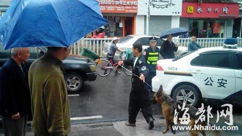 两狼狗逛东街口吓坏路人,市容局人员随后将两狼狗制服并带离