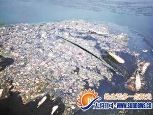 水面漂浮着各种动物内脏。 记者 马晨 摄
