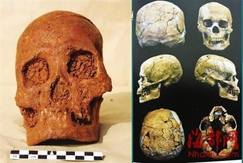南山发现的头骨(左)与澎湖亮岛1号男性头骨(右)特质相似