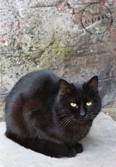 揭秘故宫神秘员工 猫保安