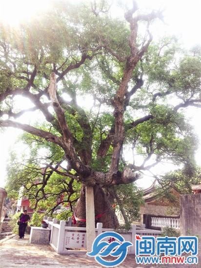 樟树已有1200年历史,村民希望它长长久久活下去