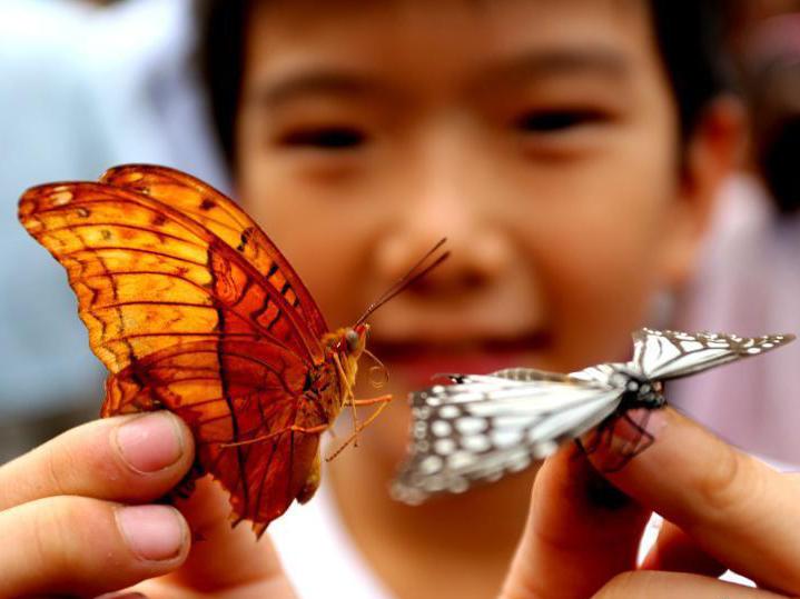 市民抢放飞的蝴蝶