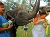 泰国小象强吻新娘