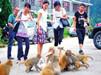 猴子集体出动打劫