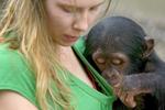 黑猩猩调戏女饲养员 扒领口端详胸部