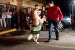 搞笑!狗狗穿裙子和主人跳交际舞