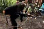 哥怒了!黑猩猩手持AK-47向士兵扫射