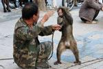 泉闹市人猴互扇耳光