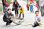 父子遛两百斤蟒蛇
