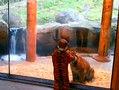 实拍宝宝穿老虎衣服和小老虎隔窗玩耍