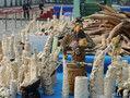 中国东莞销毁6.1吨象牙 网友称心痛