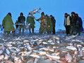 冬捕十五万斤鱼