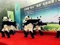 熊猫告别会的熊猫舞 看懵外国友人