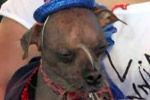 新一届世界最丑狗出炉 主人激动称很骄傲
